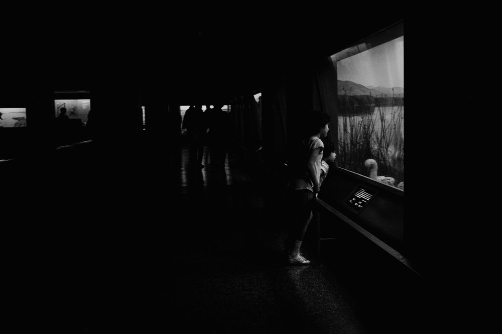 American Museum of Natural History, bergen county photographer, documentary photographer, north jersey photographer, nj photographer, nyc photographer, storytelling
