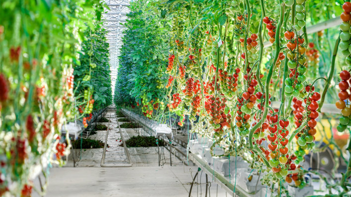 Fast Company - This midwestern greenhouse has perfected the art of growing quality tomatoes year round: 8/16/17