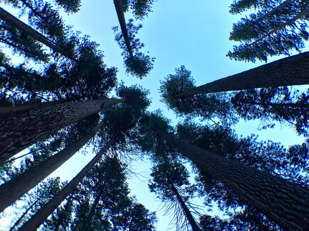 looking up from my tent