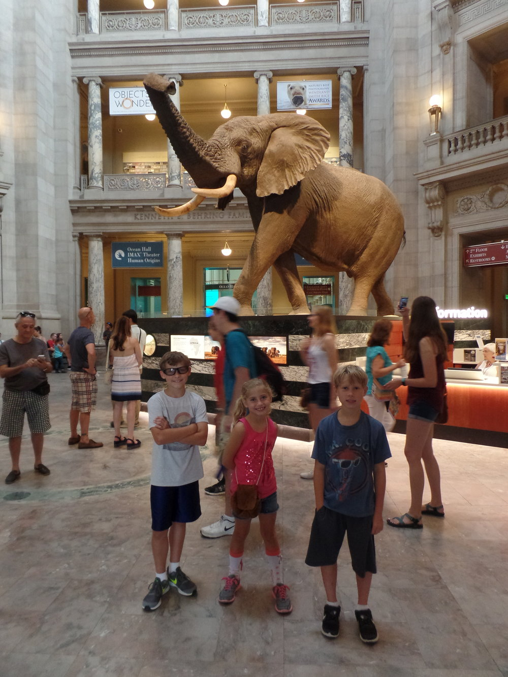 We visited the Natural History Museum. That was a big elephant.