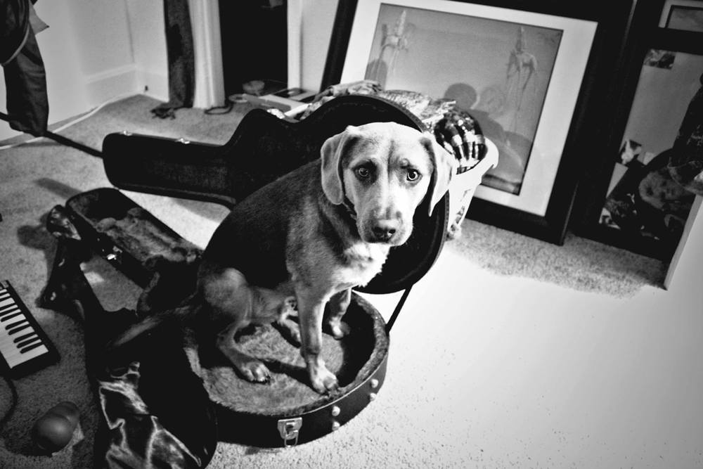 black and white photo puppy in guitar case