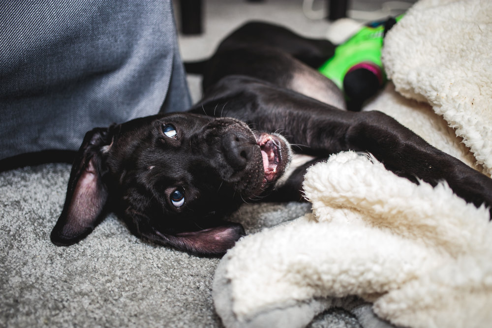 Baby dog, Syl