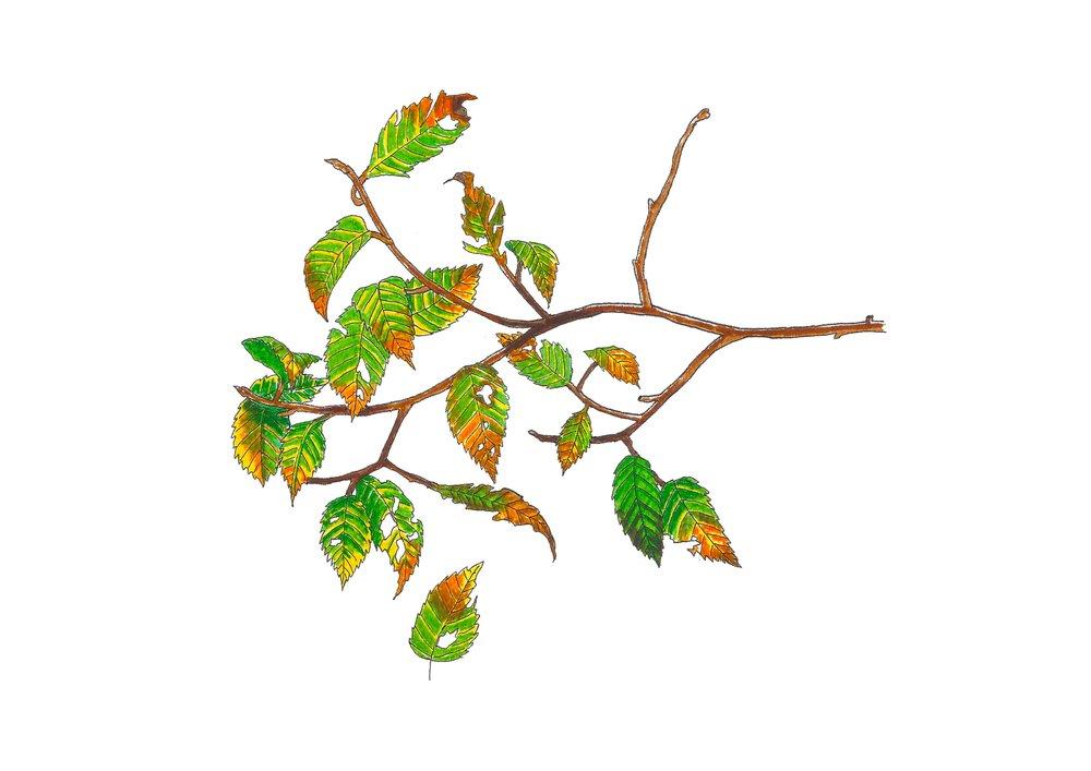 Autumn series no.1.jpg