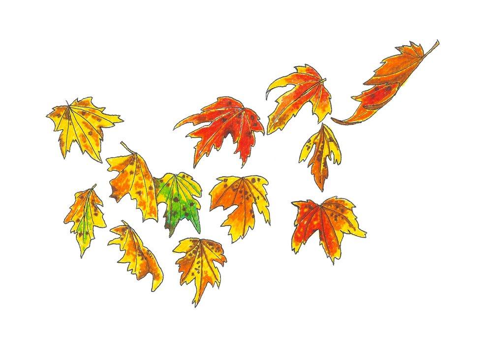 Autumn series no.2.jpg