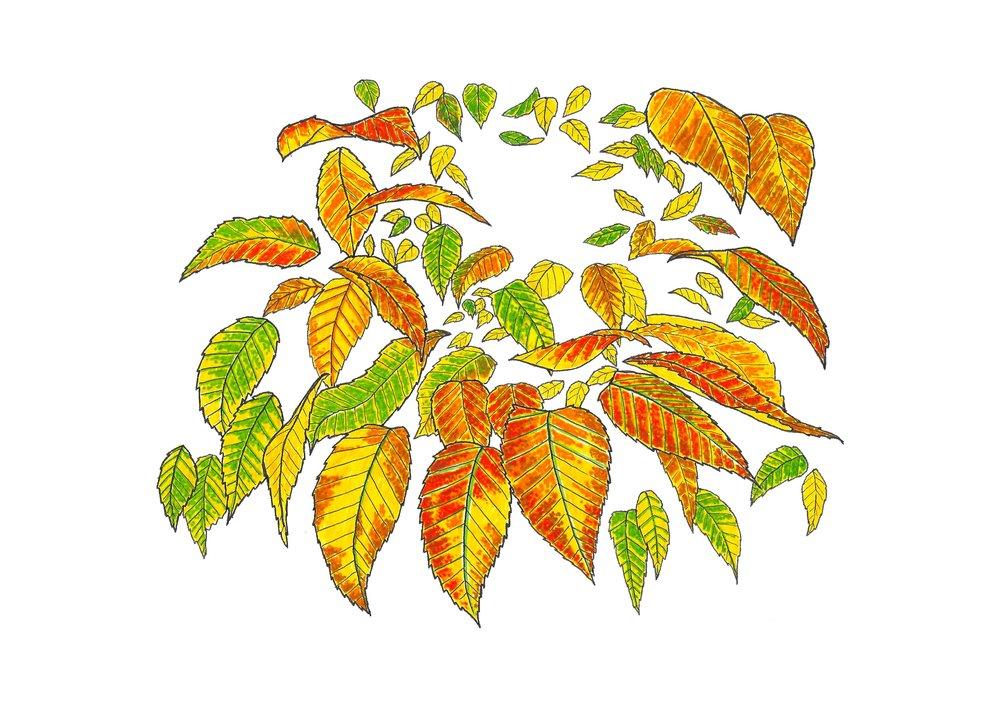 Autumn series no.5.jpg