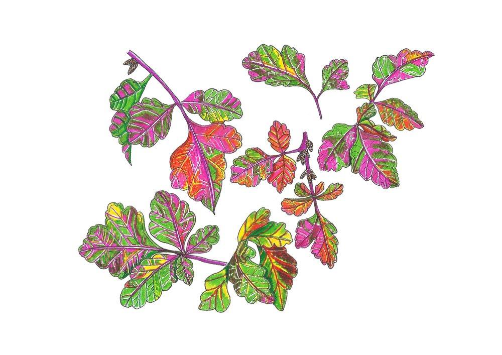 Autumn series no.9.jpg