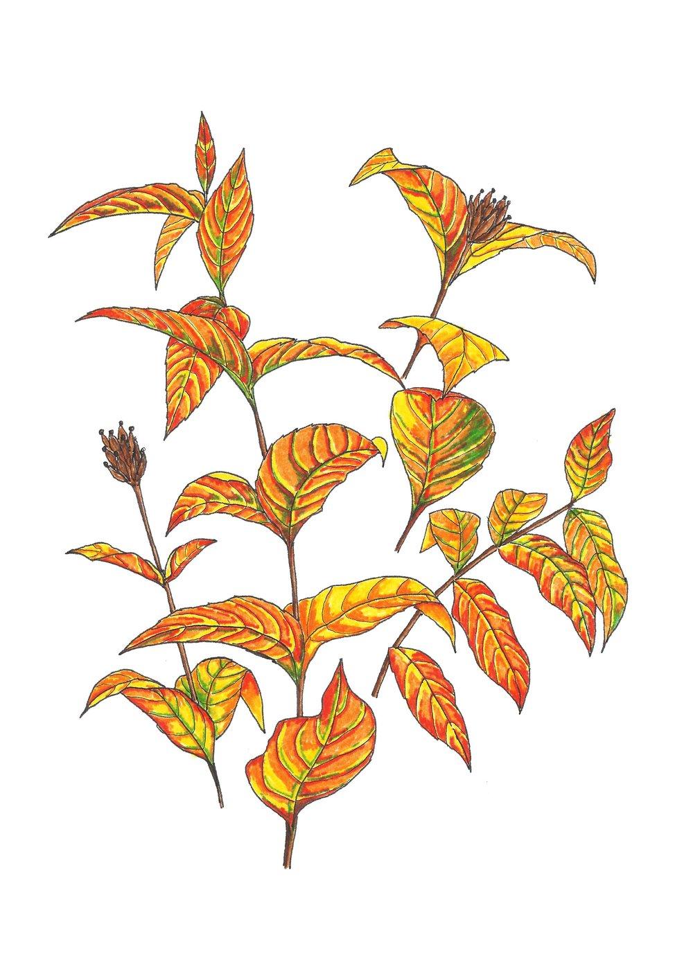 Autumn series no.10.jpg