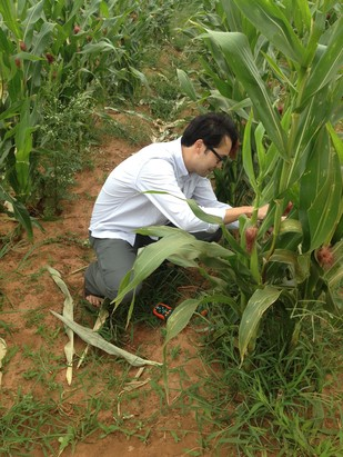 Measuring in-field crop temperatures.