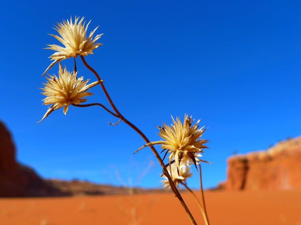 desert-82403.jpg