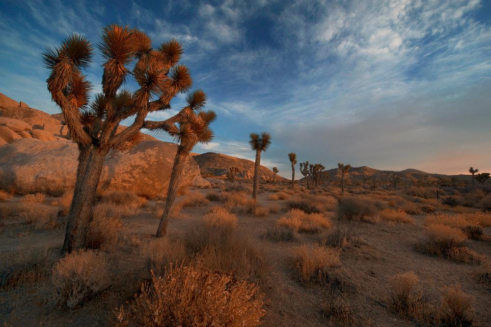 desert-sky-StockSnap_KOS30MNS09.jpg