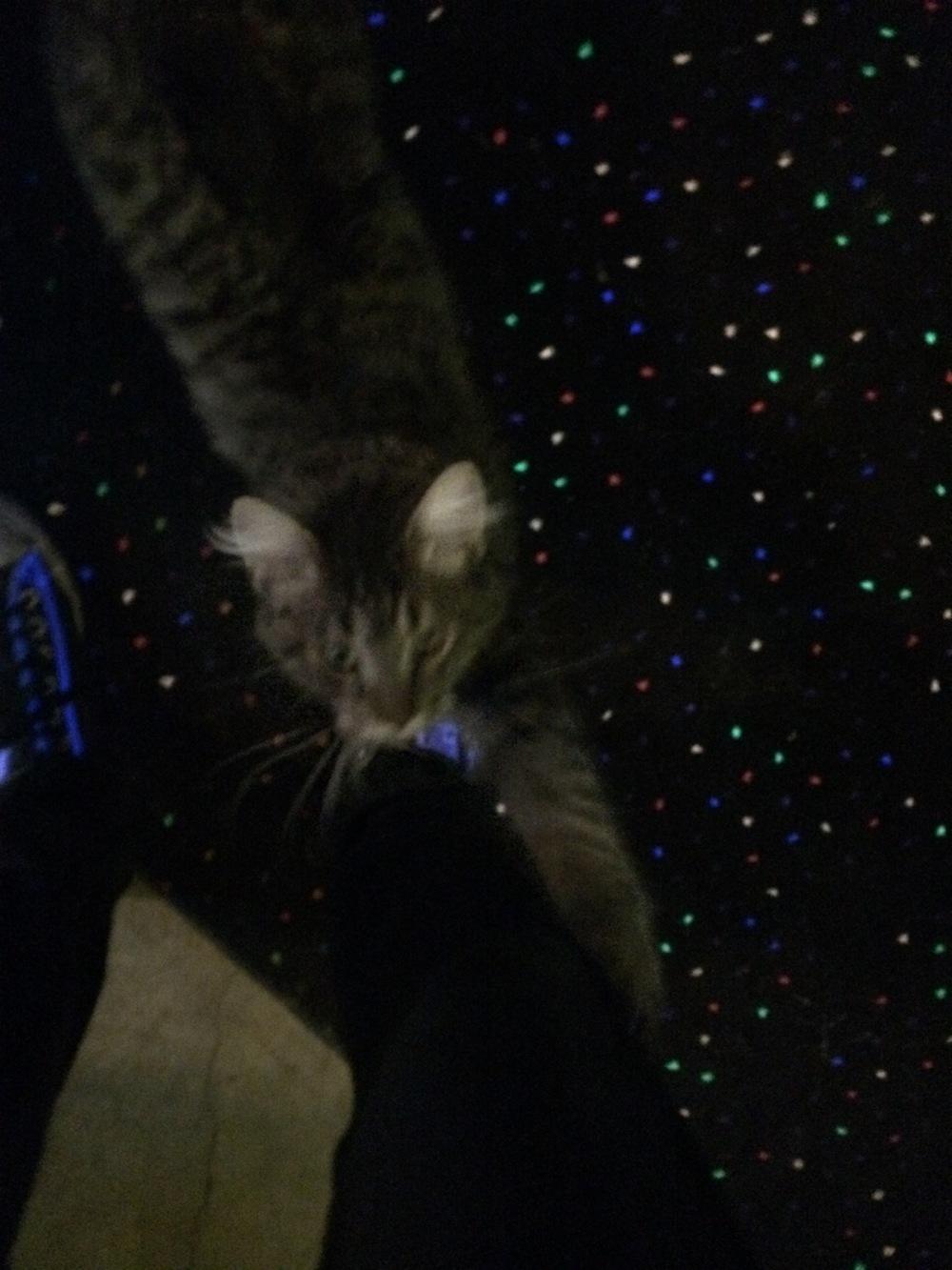 The blurry Barthcade Cat.