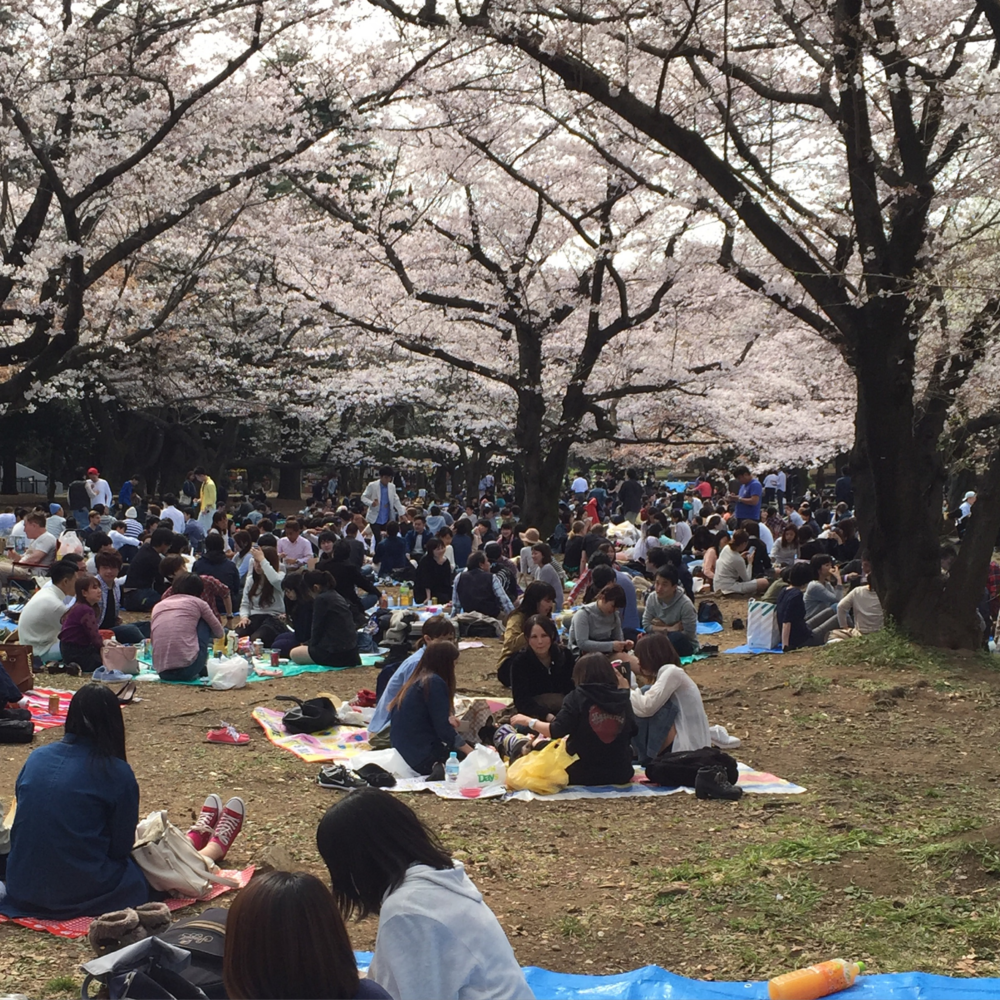 Loads of Tokyoites enjoying the blossoms and picnic
