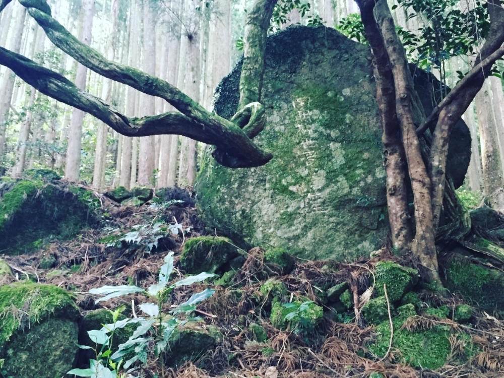Ancient inscriptions hidden by moss and roots - kumano kudo japan
