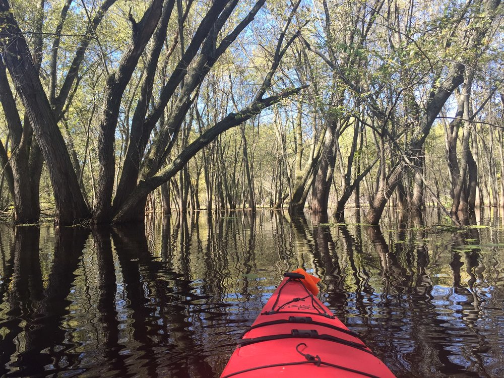 Flooded forest in the Mississippi River
