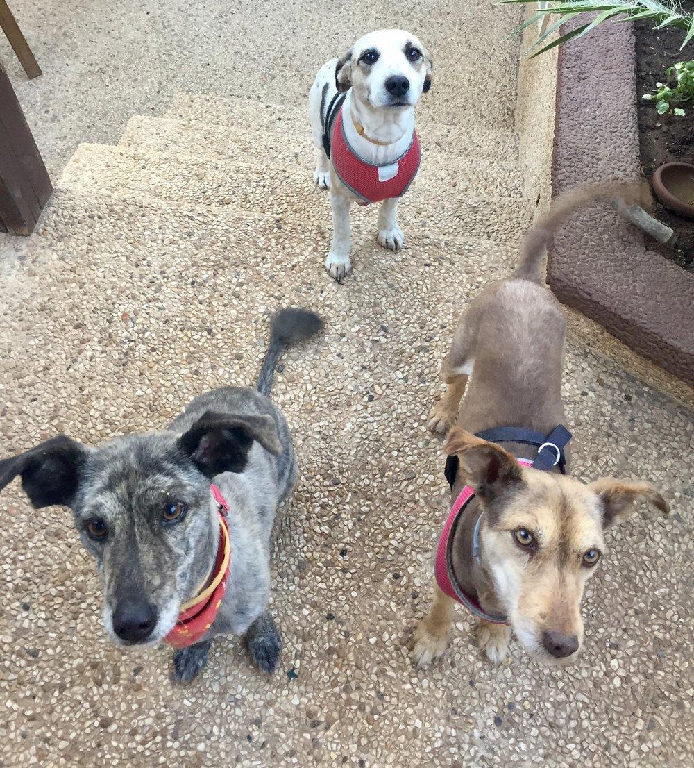 Visa-Vis-Pet-Profiles-Rescued-Pups.jpg