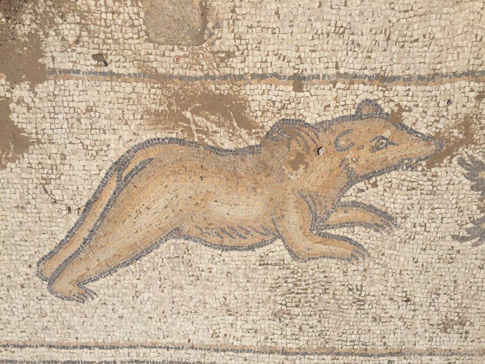 Funny little bear (?) mosaic at Caesarea