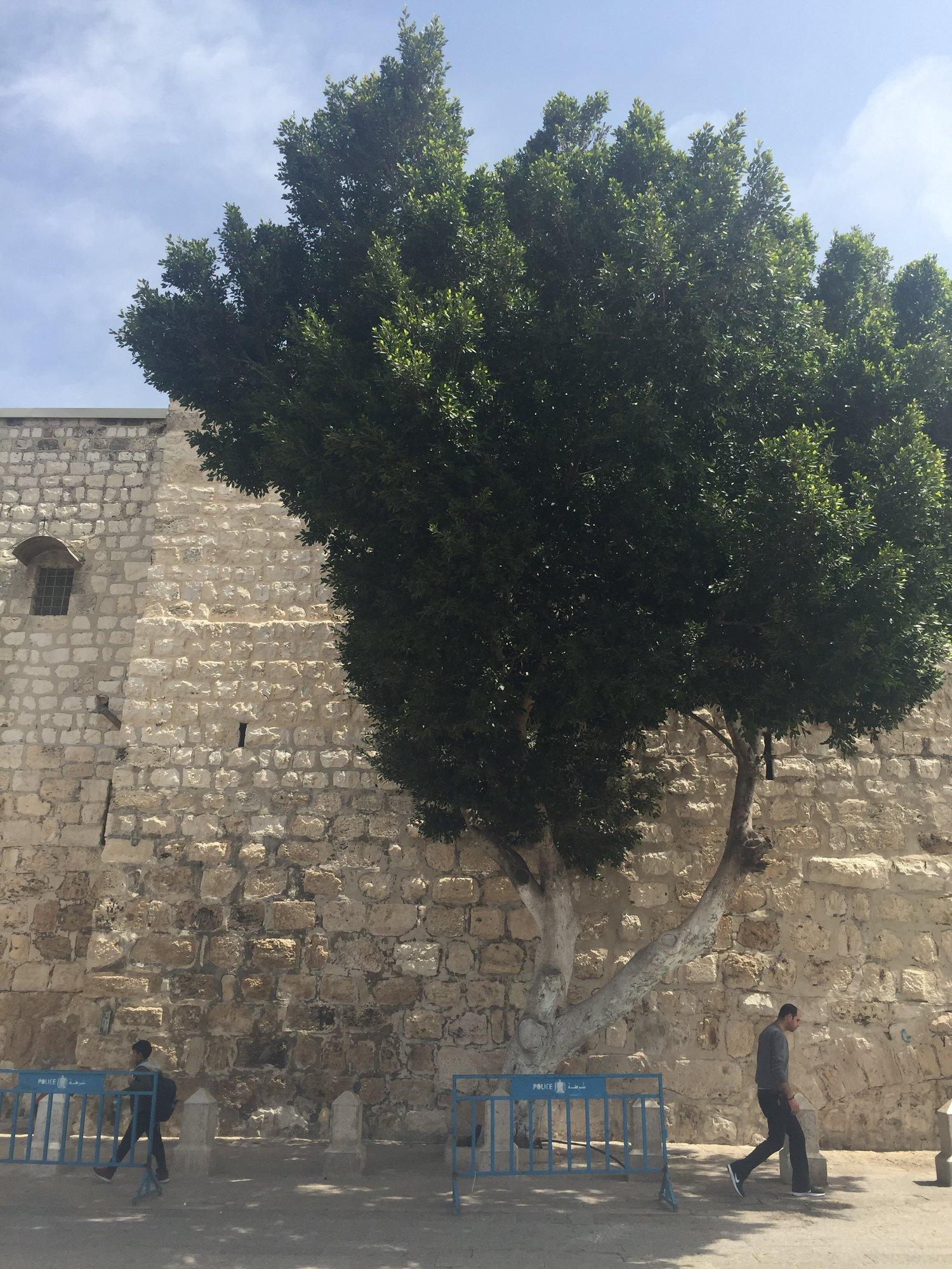 Intrepid Urban Adventures' Occupied Palestine Tour