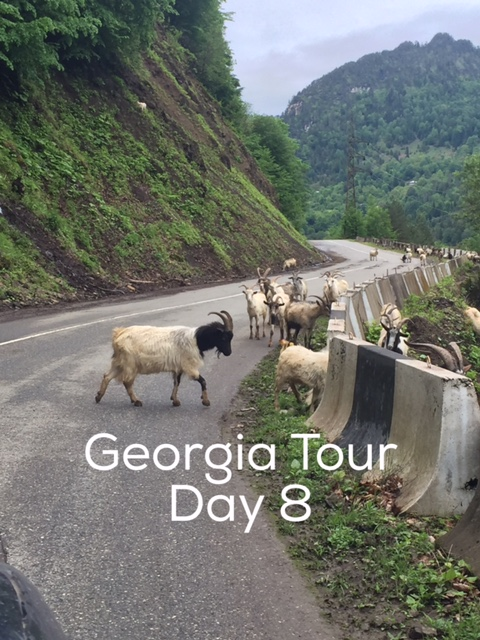 Day 8 Georgia Tour with Living Roots