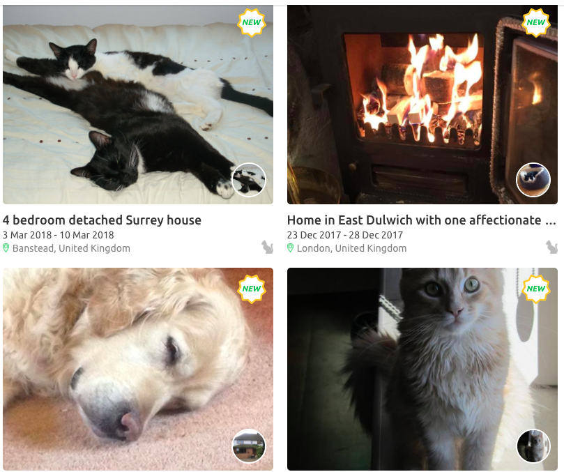 How to Attract a House Sitter: Cute Pics of Your Pets (or a cozy fireplace)