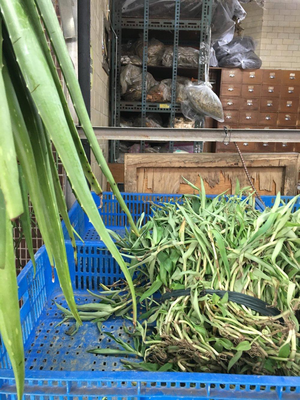 Herbs outside the shop