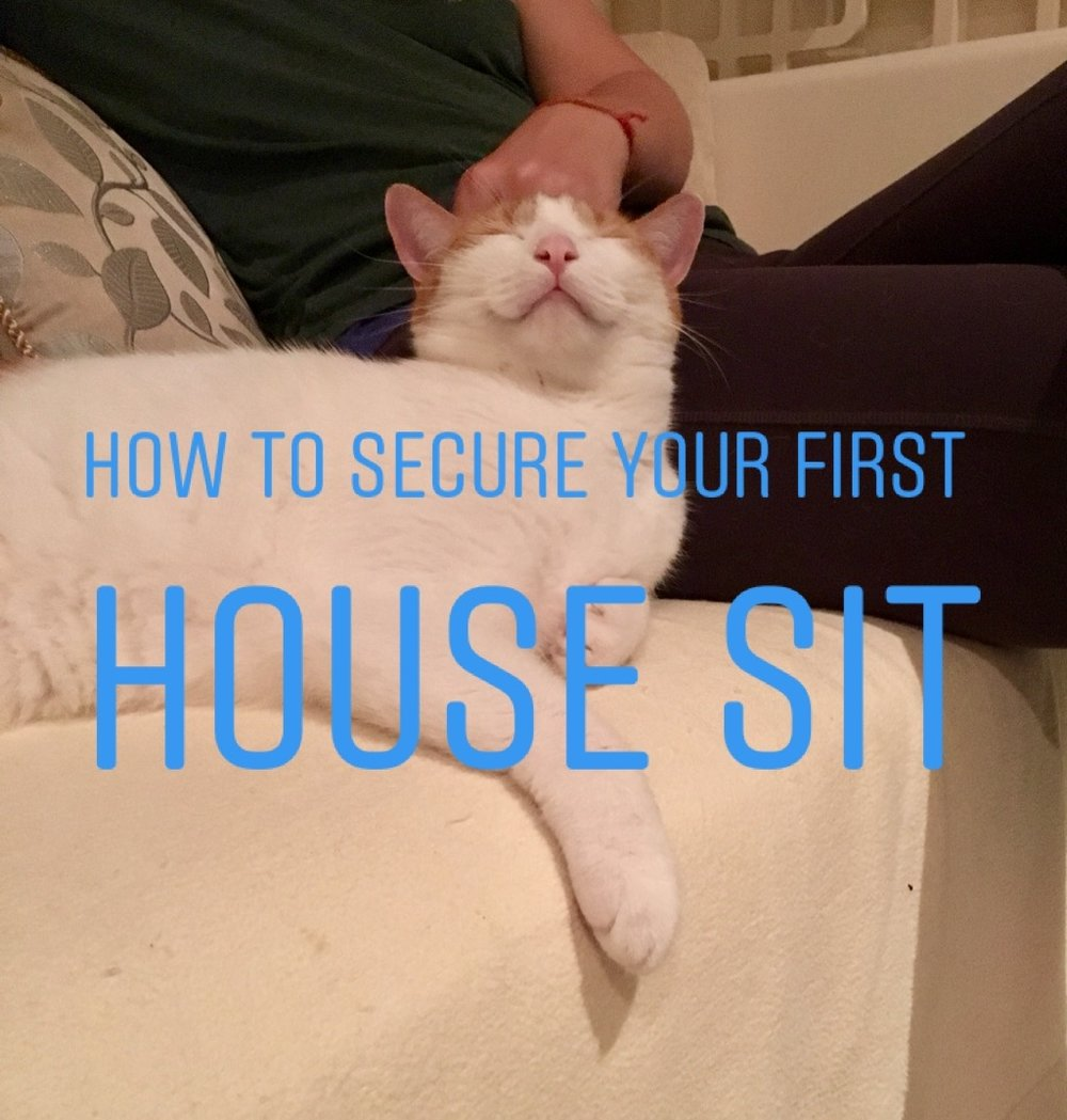 Note: Having a cat on your lap does not improve your chances of securing your first house sit