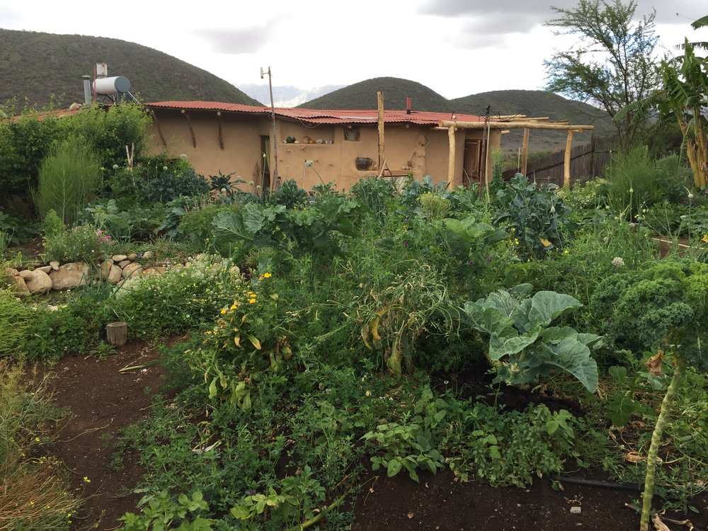 Gardens and Earth building at Numbi Valley