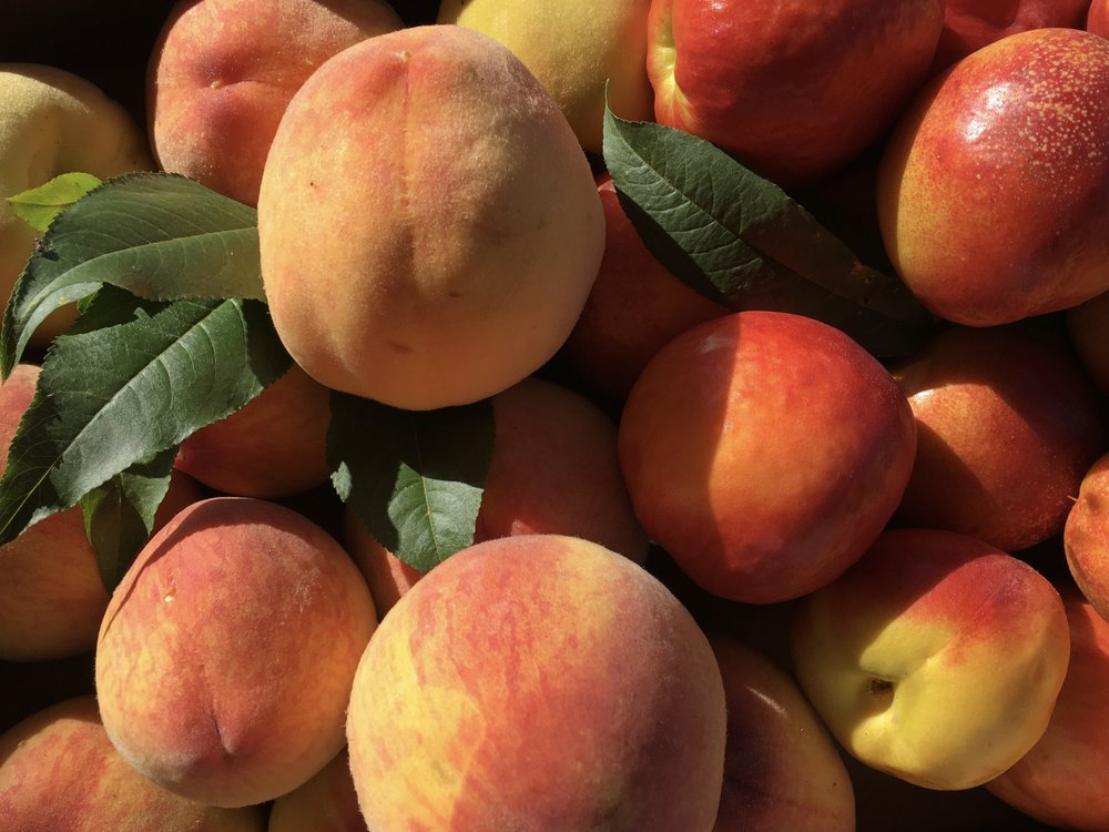 fresh off the vine: peaches and nectarines in South Africa