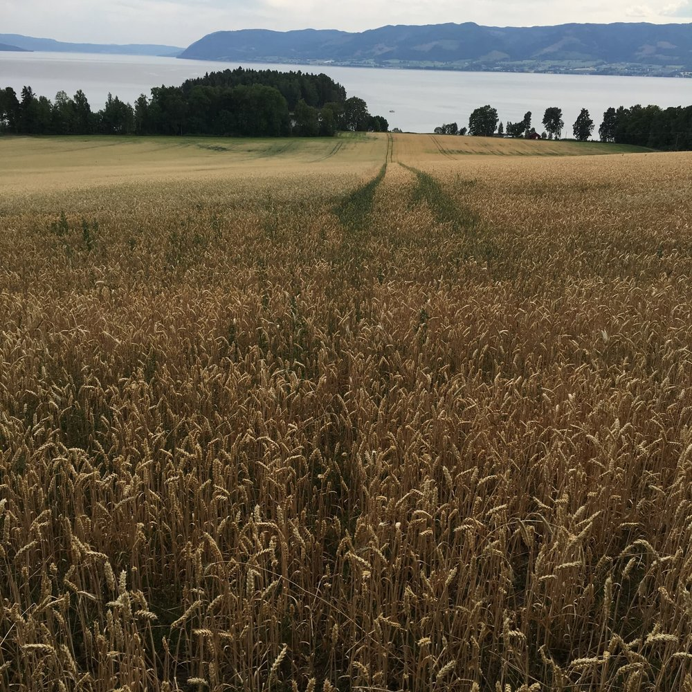 A Dry Norwegian Field