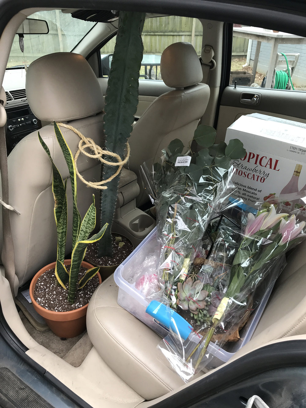 plants-in-car.jpg