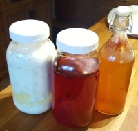 Kombucha and Kefir