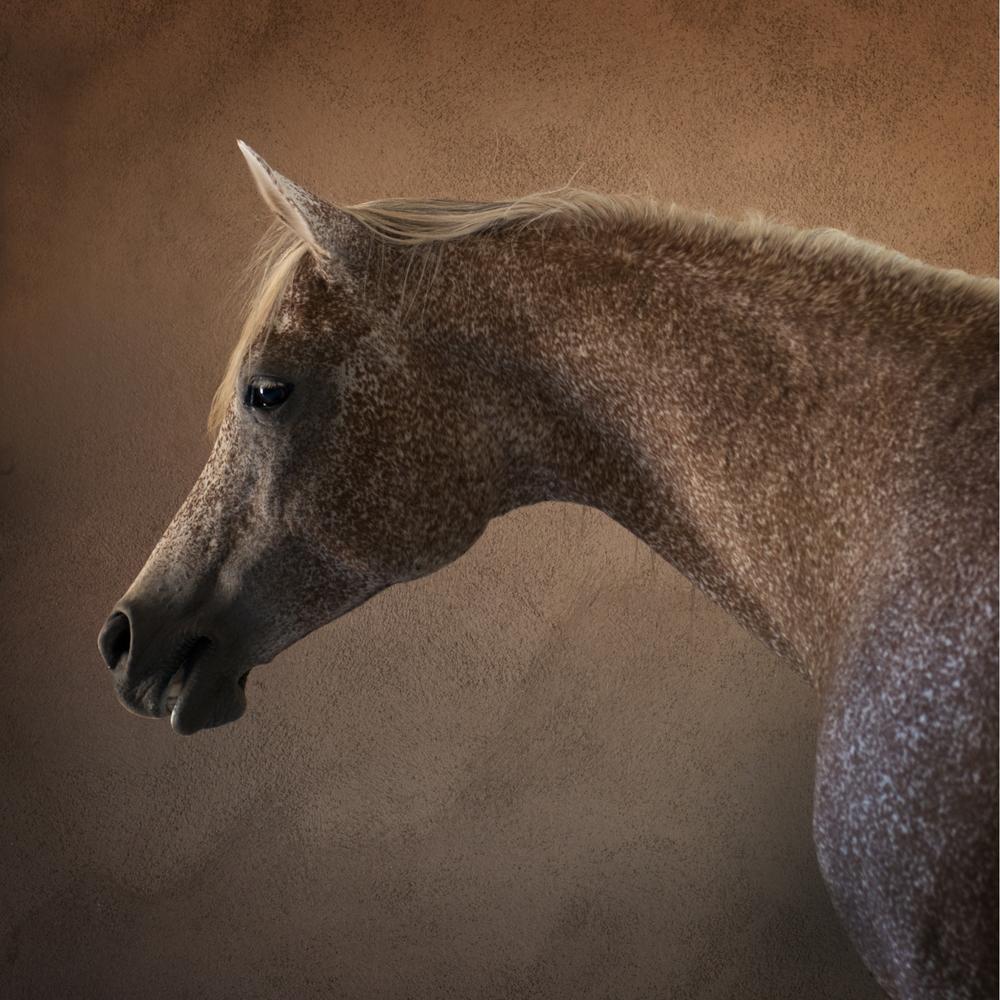 Bronzed Profile