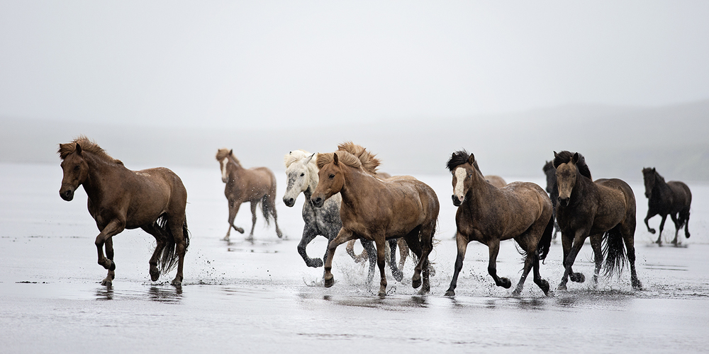 Icelandic Run