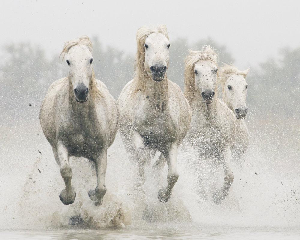 Equine 192