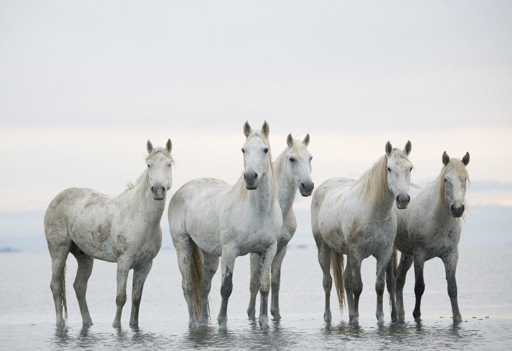 Equine 5236