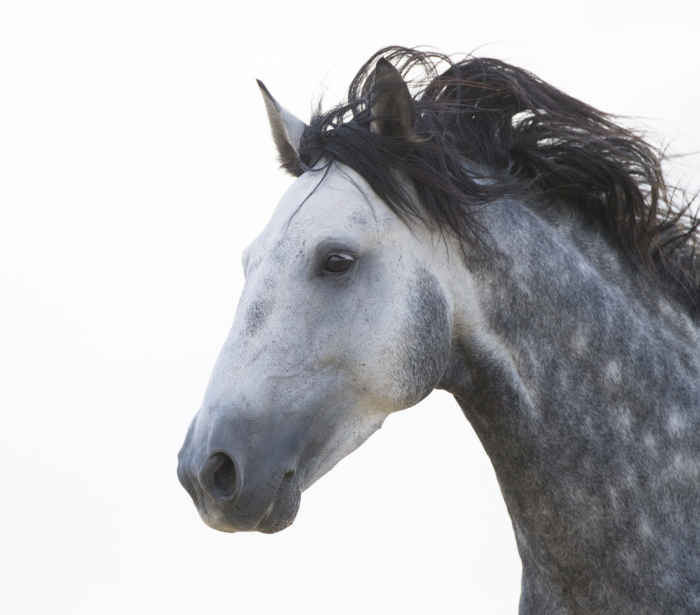 Equine 611