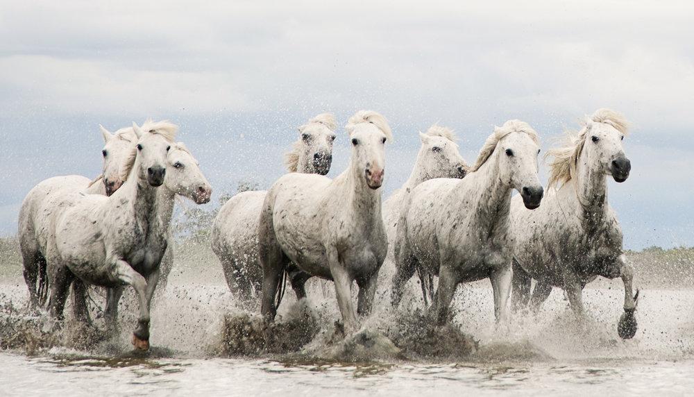 Equine 1604