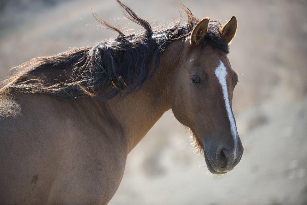 Equine 6069