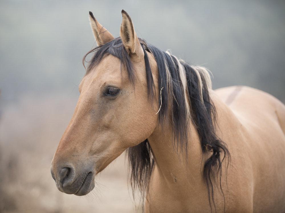 Equine 5763