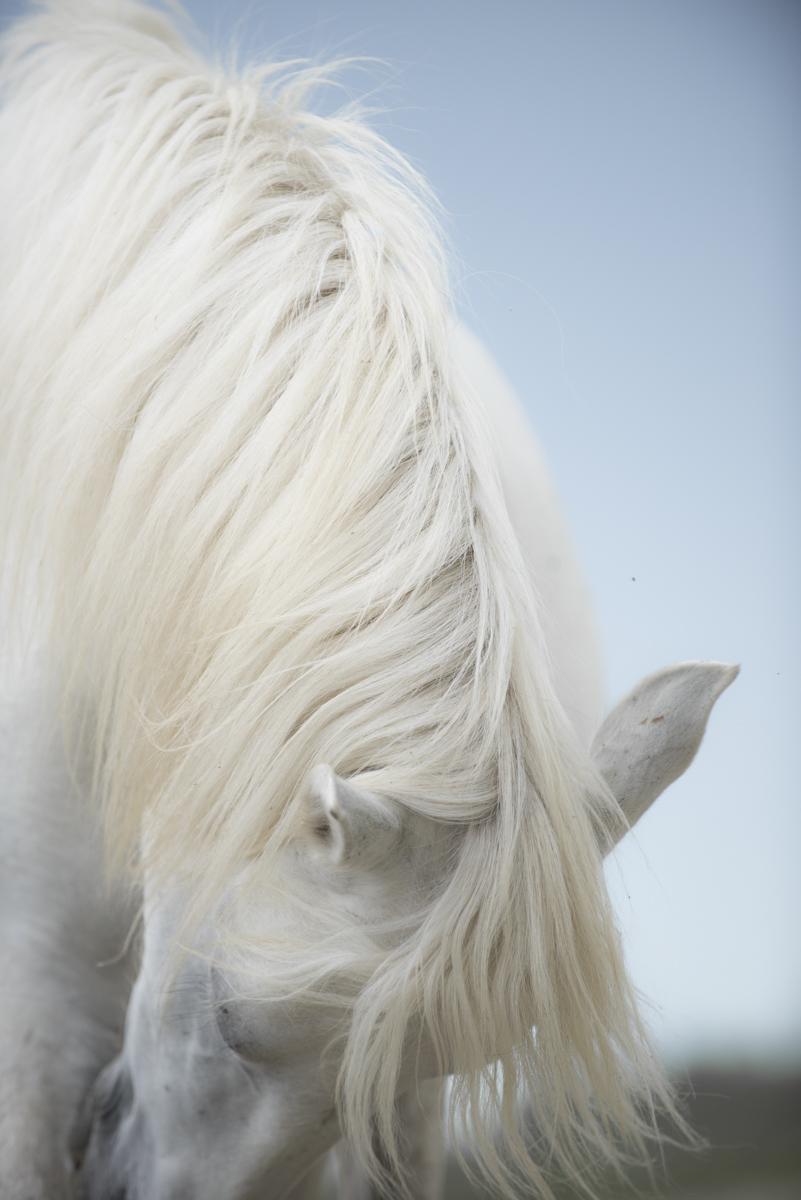 Equine 9228