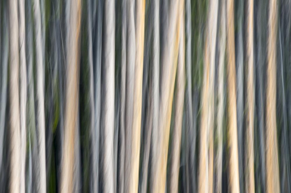Montana Abstract 6798