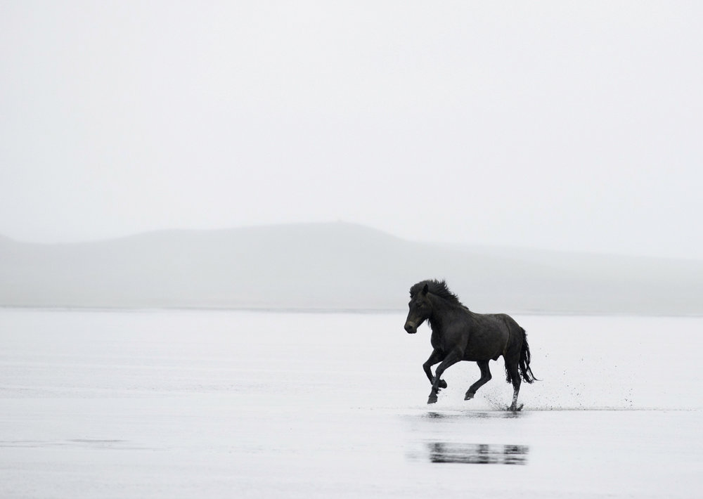 Equine 7563