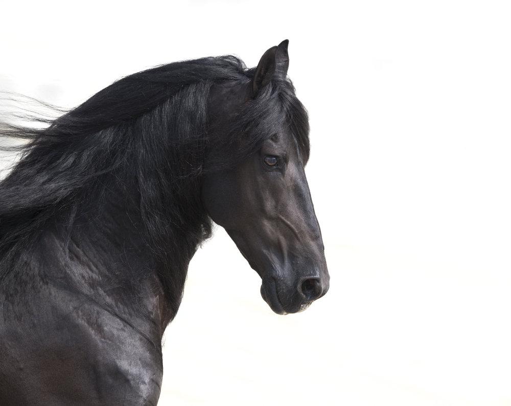 Equine 650
