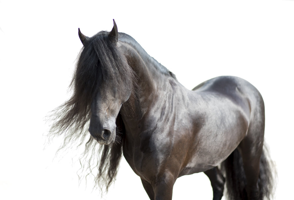 Equine 8521
