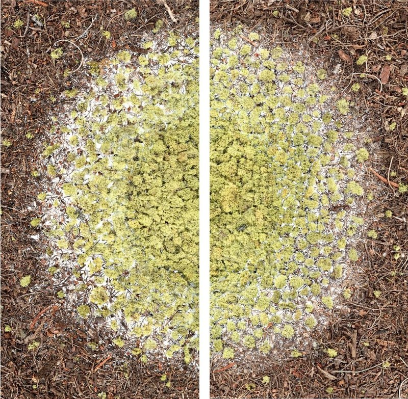 Stephen Galloway Nebular, 2011 LightJet C-print from scan-based images diptych 76.25 x 76.25 inches overall