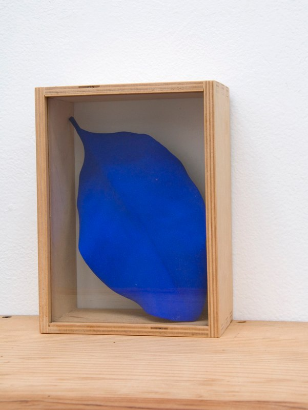 Mari Andrews Boxed Leaf, 2002 magnolia leaf, pigment, wooden and glass box 7.5 x 5.5 x 3 inches
