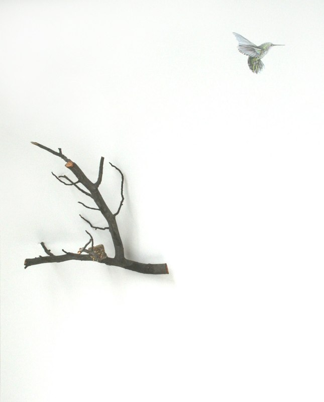 Away from Home, 2010, graphite drawing on wall with colored pencil and found object / branch with humming bird nest, 48 x 36 x 14 inches