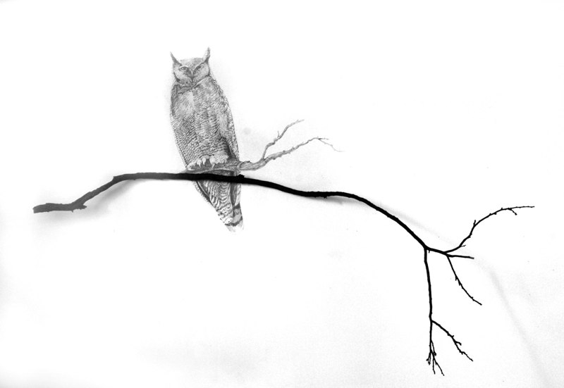 A Theory of Knowing, 2010, graphite drawing on wall with found branch, 46 x 32 x 22 inches