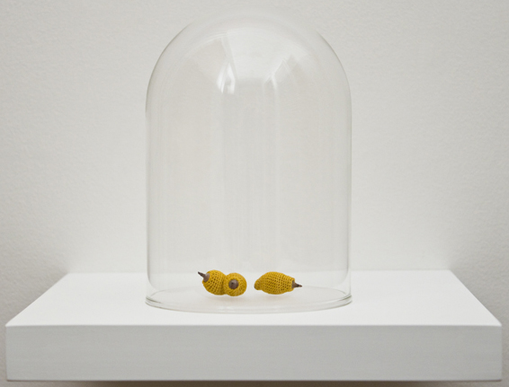 Esther Traugot, Seed Dome (Live Oak Acorn), 2014, live oak acorn seed, hand-dyed cotton thread,  glass, wood shelf, 6 x 6 1/2 x 6 1/2 inches