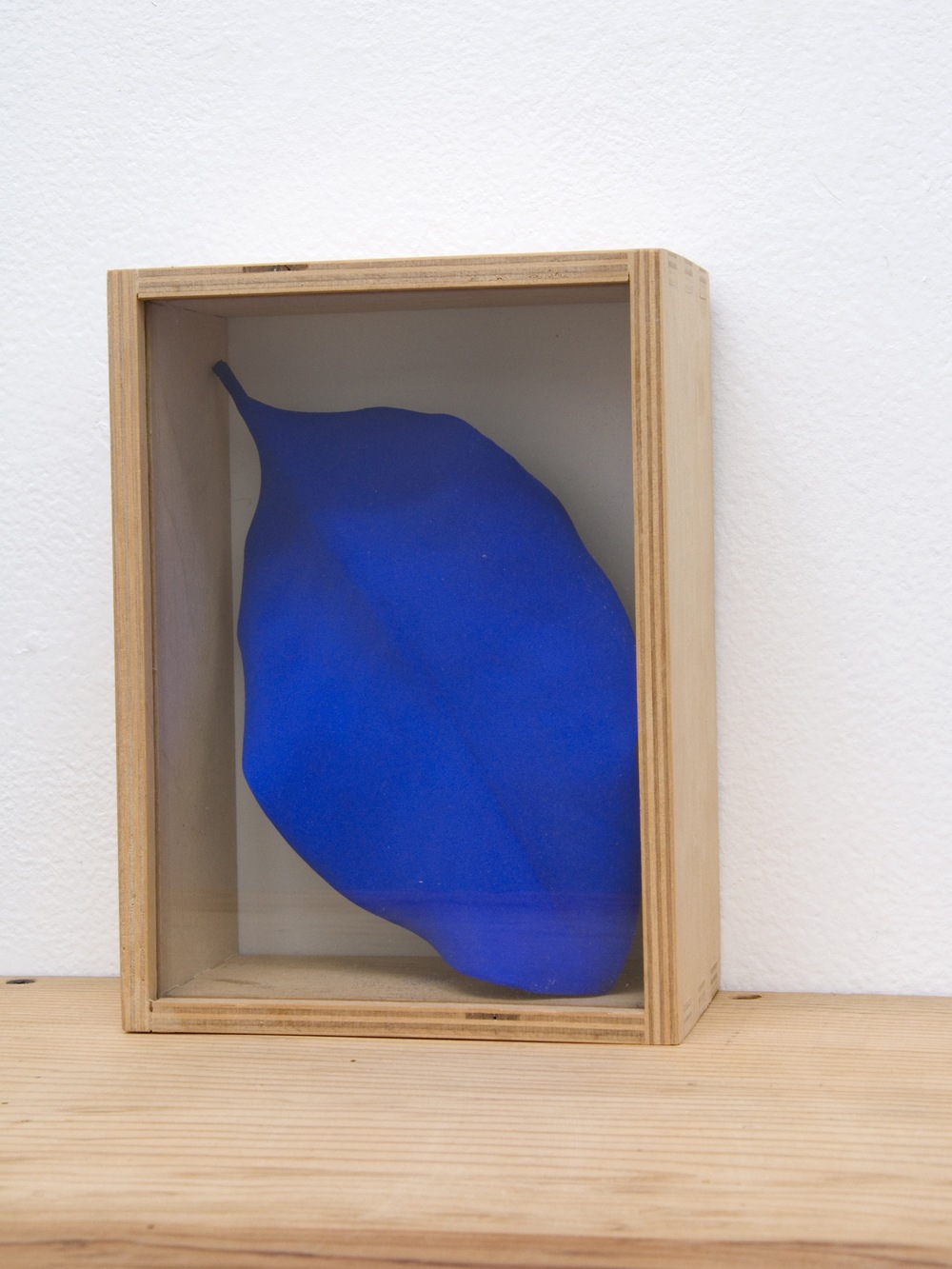 Boxed Leaf, 2001, magnolia leaf, pigment, wood, glass, 7 x 3 x 2 inches