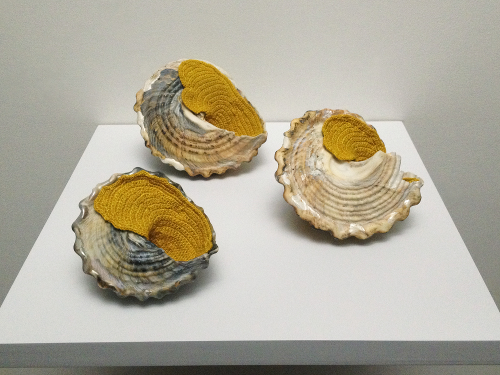 Esther Traugot, Home Again 5 (Coracol Shells), 2015, Caracol seashells, hand-dyed bamboo yarn,  wood shelf, 11 1/2 x 11 1/2 x 4 5/16 inches
